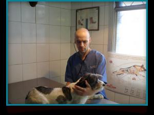 Desde el año 2001 solucionando los problemas de salud de las mascotas en Chile.